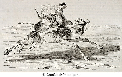 Dromedary riding at full gallop hunting gazelles, old illustration. Created by Chacaton, published on Magasin Pittoresque, Paris, 1842