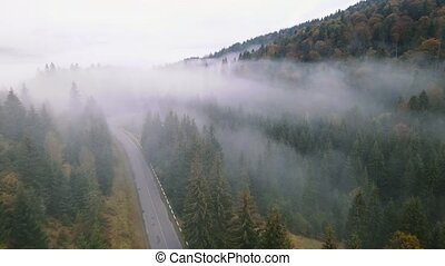 Drone aerial view of misty morning with a fog in a mountains. Flight through the pine forest.