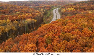 Drone Dolly Out Flying Over Yellow Foliage Dense Deciduous Trees at Fall season in temperate deciduous forest