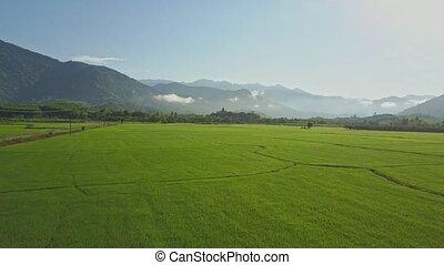 Drone Flies above Rice Plantations against Sunrise Hills Sky...