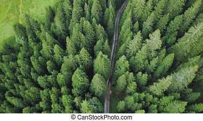 Drone flies over a road through the green trees of the forest