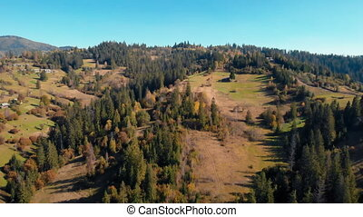 drone flies over the pinewood - aerial view on the pine...