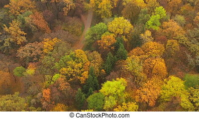 Slow panning over a mixed coniferous-deciduous autumn forest with walking paths at low altitude. Drone flight over the treetops in the autumn forest. Varied autumnal leaf of trees in a mixed forest.