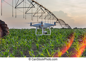 Drone flying above corn field and mapping - Drone flying and...