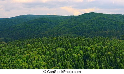 drone flying above on upper branches of forest - aerial ...