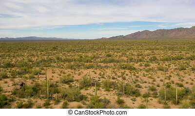 Drone Flying Above Saguaros In Sonoran Desert, Arizona- Wide Shot