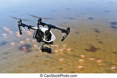 Drone flying above swamps with birds