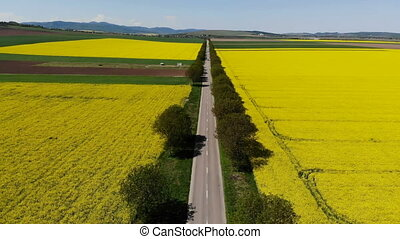 Drone flying along beautiful road between rape fields....
