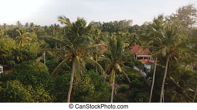 Drone flying around big green coconut palm trees and tropical vacation hotels and houses on exotic sunny resort island.