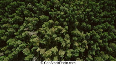 Drone flying forward above beautiful forest treetops. Aerial 4K flyover birds eye shot of scenic wilderness. Vertical view of early autumn greenery nature leaf trees pattern of green and yellow.