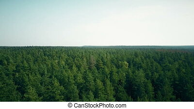 Drone flying forward and up over windy forest. Aerial 4K...