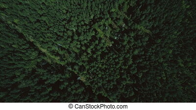 Drone flying forward high above lush green forest. Aerial 4K...
