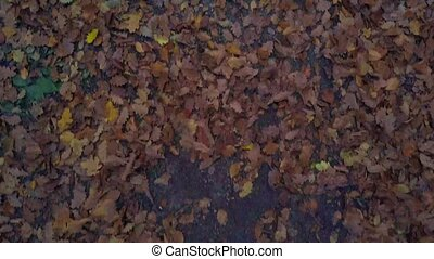 Drone flying low in an autumn forest, whirling up red, yellow and green foliage from the walkway.