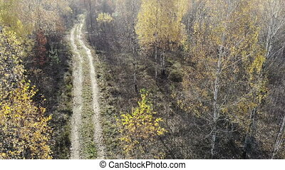 drone getting up in autumn yellow forest near rural road, on the woods, fly over yellow, aerial shot