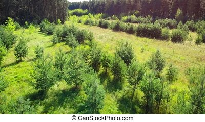 Drone flying at low altitude over the tops of saplings in a meadow, in this forest wilderness of European Russia.