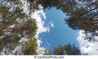 Skyward camera angle shows dramatic passage from drone's perspective as it performs a vertical takeoff between branches of a pine forest.