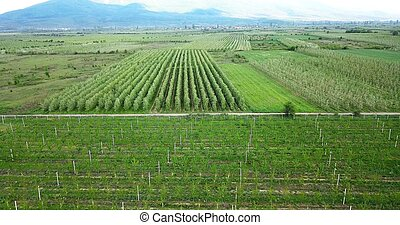 drone photography, aerial view of orchards in resen, prespa...