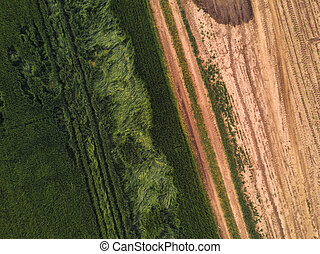 Drone point of view on cultivated wheat field