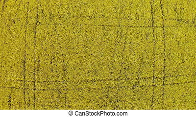 Drone rises into the sky over the yellow field with rape