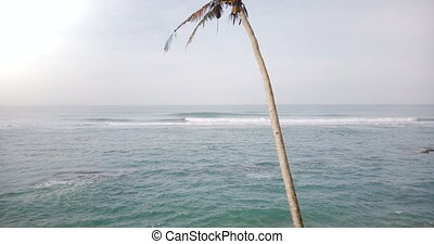 Drone rising from the ground above amazing sunny ocean foaming waves panorama to reveal a single palm tree with coconuts