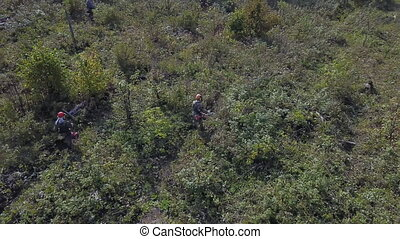 Drone shot of Bushes and weeds is getting sawn by worker ...
