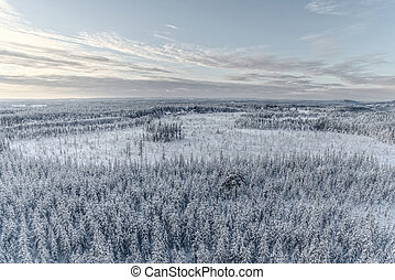 Drone shot of Lapland forest in winter