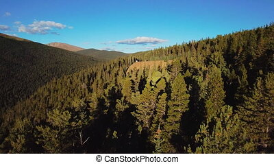 Drone slowly moves over the tops of pine trees on the slope of the high mountain in Colorado, USA