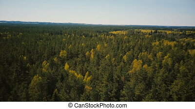 Drone spinning fast over beautiful ancient forest. Aerial 4K...