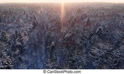 Drone video of forest in Finnish Lapland, above the Arctic...