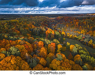 Drone view of colorful tree tops, Lithuania, fall