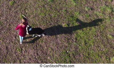 Aerial drone view of girl playing with dog at spring park. Playful dog with owner.