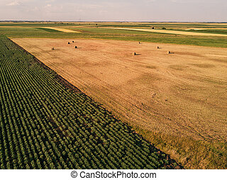 Drone view of round hay bales in field