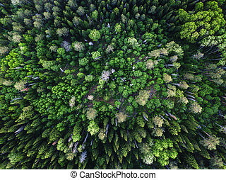 Drone view on green forest