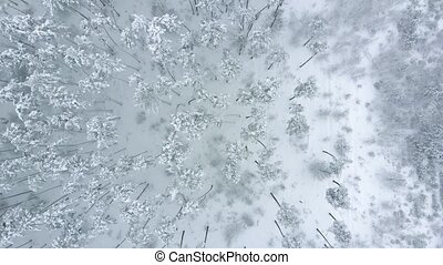 Drone whirls and slowly takes off over snow-covered winter pine forest. Flight above winter forest, aerial top view. Aerial background high above winter snow covered trees in snowy forest. Flat lay.