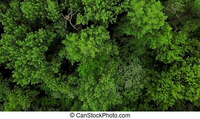 Drone's Eye View - 4K aerial top down view of forest trees...