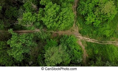 Drone's Eye View - 4K aerial top down view of woodland...