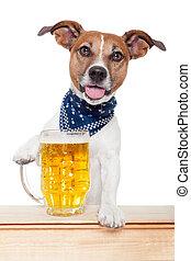 dronken, dog, met, bier