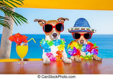 dronken, honden, cocktail