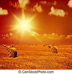 droog, akker, ondergaande zon , tarwe