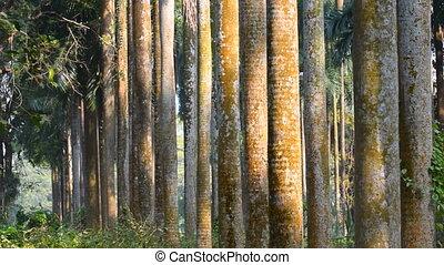 droog, bladeren, het vallen, van, bomen, humeurig, winter boom, wortels, backlground