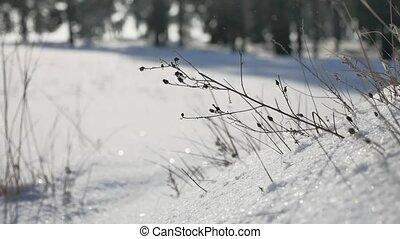 droog, gras, in, winter, sneeuw, bos, landscape, de, natuur
