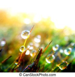Drop background - Drop on plants, stylish image