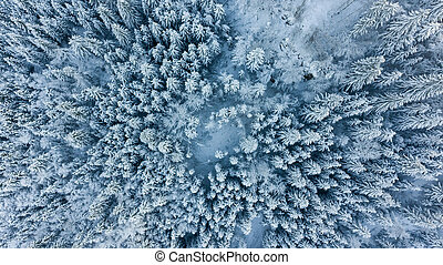 Drop down view of snow covered forest. Winter pine trees from above.