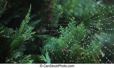Drop of condensation on the spider-web - macro shot
