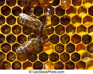 Drop of honey and bees