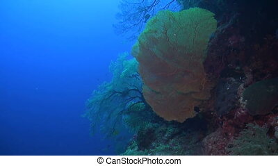 Drop off on a coral reef