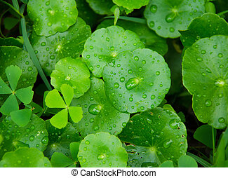 drop on green leaf for background