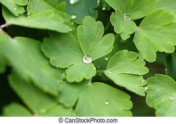 Droplets in nature