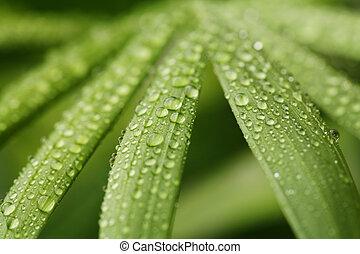 Droplets on leafs