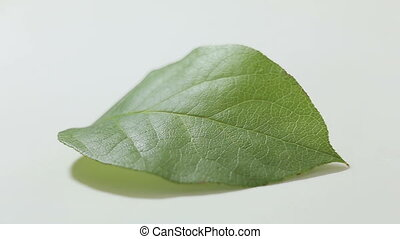 Dropping water on green plant leaf